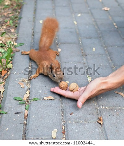 Squirrel and hand with nuts