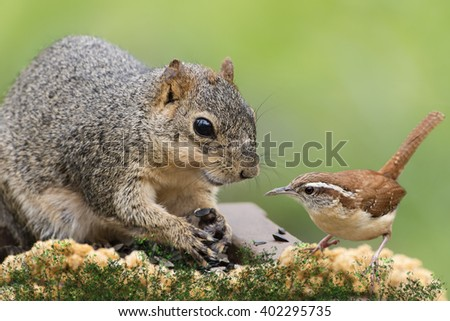 Squirrel and Wren Friends - stock photo