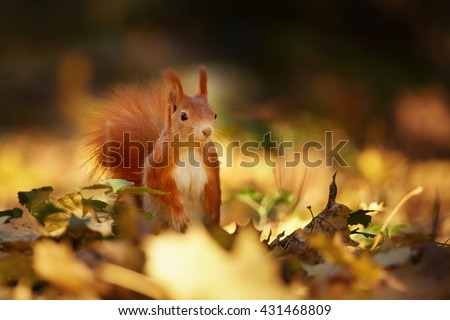 Squirrel, Autumn, nut and dry leaves - stock photo