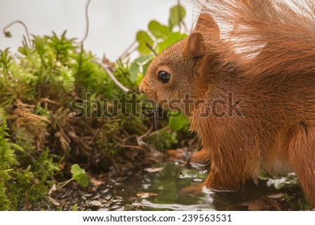 squirrel bathing in water