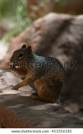 Squirrel chilling in shade at Zion National Park - stock photo