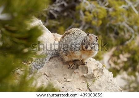 Squirrel chipmunk - stock photo