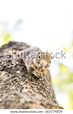 Squirrel clinging and eating nuts on a tree. - stock photo