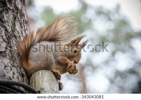 squirrel eating a nut on the tree - stock photo