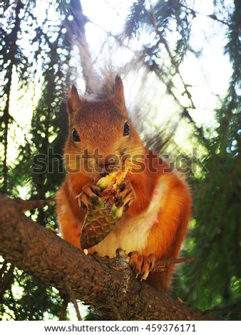Squirrel eating cone - stock photo
