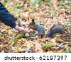 Squirrel eating from a hand - stock photo