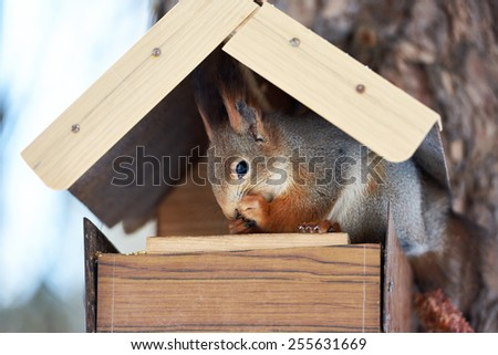 Squirrel eating in the feeder at winter - stock photo