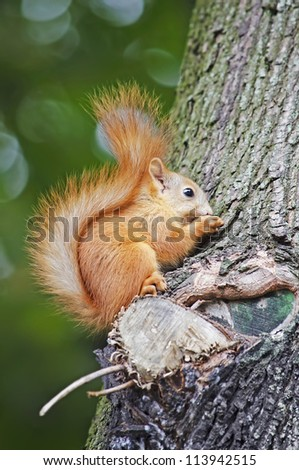 Squirrel eating on the tree