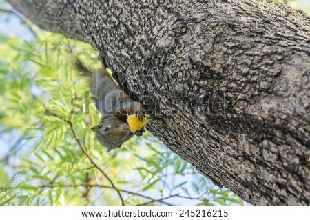 Squirrel eating on the tree - stock photo