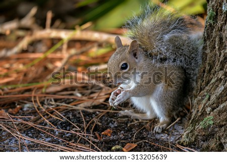 squirrel eating seeds in wetland brush - stock photo