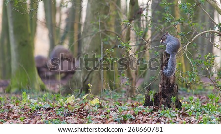 Squirrel having his meal - stock photo