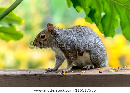Squirrel in a close-up sitting on the board - stock photo