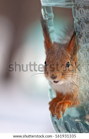 Squirrel in the feeder - stock photo