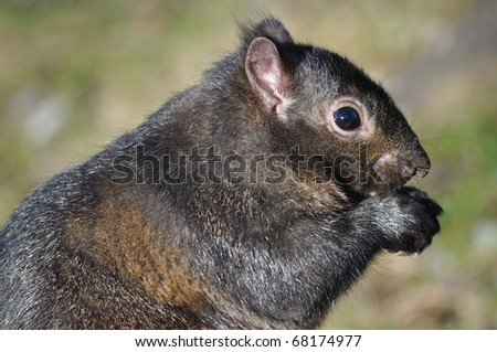 Squirrel is eating - stock photo