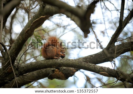 squirrel is eating a nut in a tree