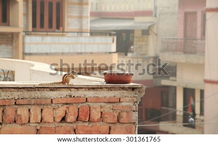squirrel is eating someting on the roof of building in Delhi, India