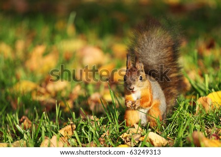 squirrel jumps - stock photo