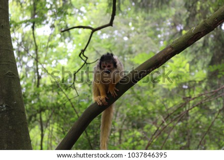 Squirrel monkey on a three