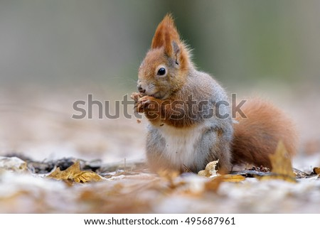 Squirrel nutty picnic