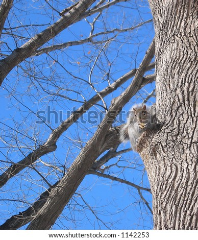 Squirrel of Central Park - stock photo