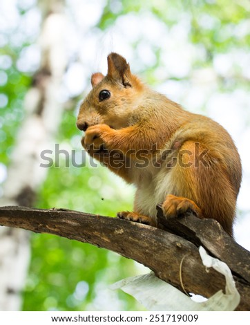 squirrel on a tree in summer forest - stock photo