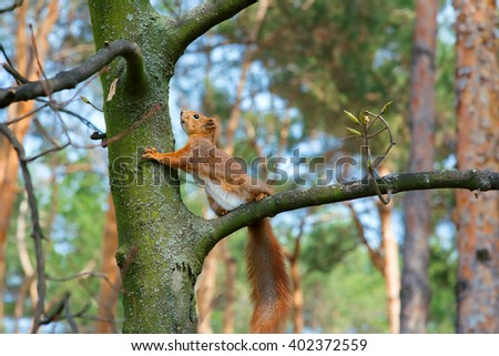 squirrel on a tree in the spring forest