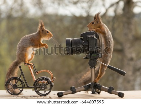 Squirrel Bike Stock Images Royalty Free Images Vectors