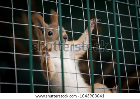 squirrel on the cage mesh keeps feet