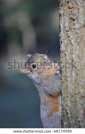 Squirrel on the tree - stock photo