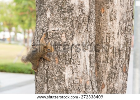 squirrel on the tree in the park
