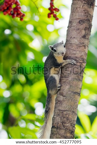 Squirrel on the tree , selective focus - stock photo