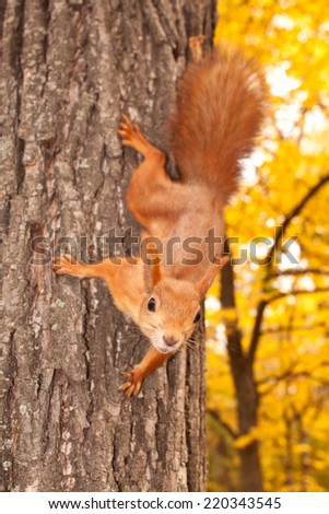 Squirrel on the tree trunk - stock photo