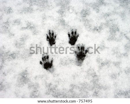 Squirrel paw prints in the snow. - stock photo