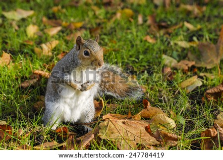 squirrel portrait in park - stock photo
