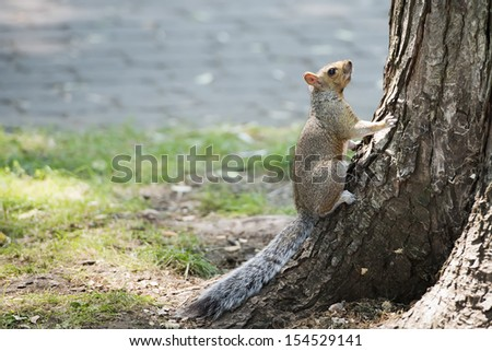 Squirrel portrait while looking at you - stock photo