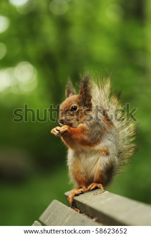 Squirrel sitting on the bench eating the nut - stock photo