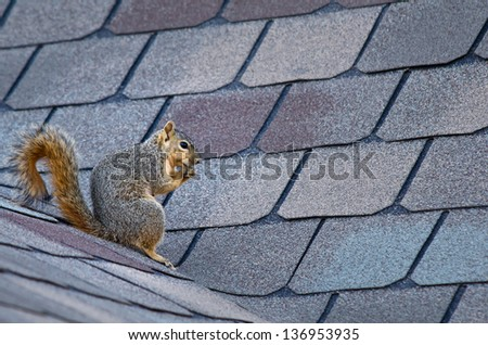 Squirrel sitting on the roof - stock photo