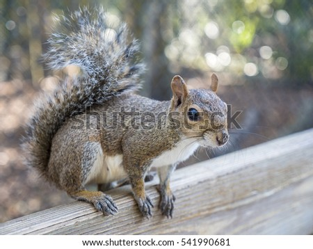 Squirrel Sitting On Wooden Railing Outside