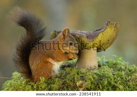 squirrel standing on moss before a mushroom