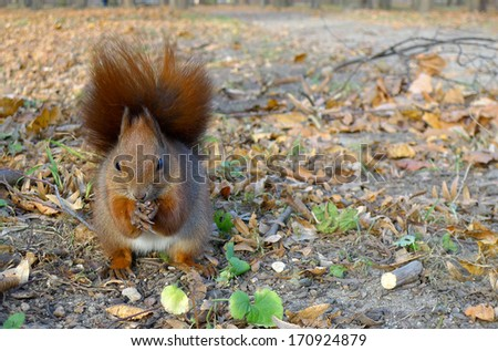 Squirrel standing on the floor, hands clasped - stock photo