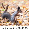Squirrel staring in the autumn park - stock photo