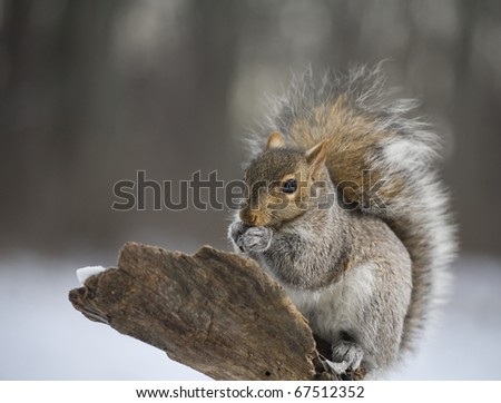 Squirrel that looks like its teeth are chattering in the ...