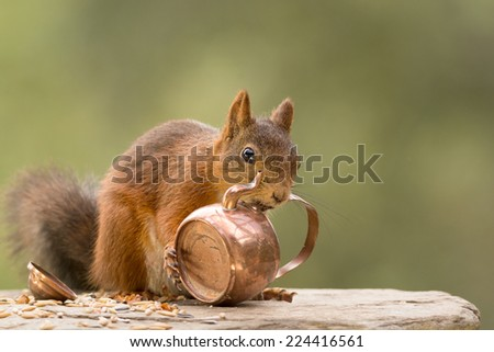squirrel with a copper teapot in mouth