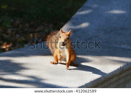 Squirrel with a nut in its mouth in the park. Selective focus. - stock photo