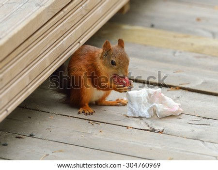 Squirrel with trophy from garbage can - stock photo
