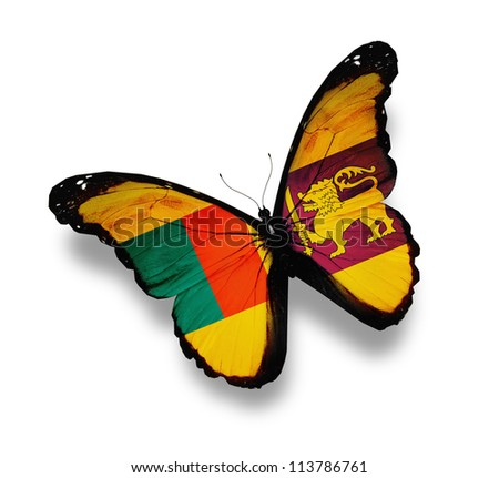 Sri Lanka flag butterfly, isolated on white