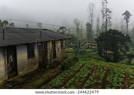 sri lankan agricultural area in the central highland - stock photo
