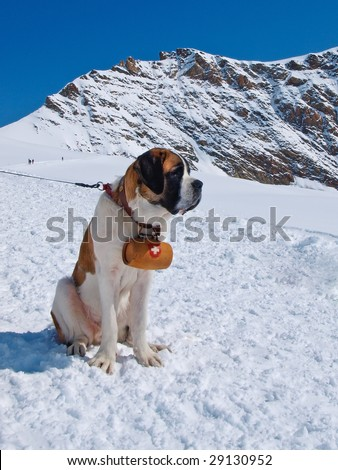 St. Bernard Dog on the snow with keg - stock photo