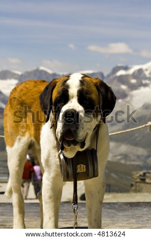 St. Bernard rescue dog in front of snowy Swiss mountains - stock photo