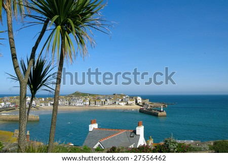 St. Ives harbour palm trees. - stock photo